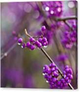 Vivid Beauty Berries Canvas Print