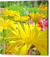 Vivid Colorful Yellow Daisy Flowers Daisies Baslee Troutman Canvas Print