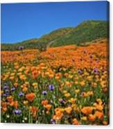 Vivid Memories Of The Walker Canyon Superbloom Canvas Print
