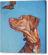 Vizsla And The Butterfly Canvas Print