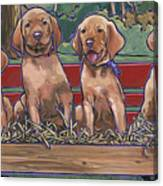 Vizsla Pups Canvas Print