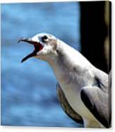 Vocal Sea Gull Canvas Print
