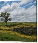 Volcanic Blooms Canvas Print
