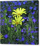 Voltage Yellow And Electric Blue 06 Canvas Print