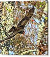 Vulture Glide Canvas Print