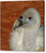 Vulture Portrait Canvas Print