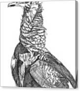 Vulture Sketch Canvas Print