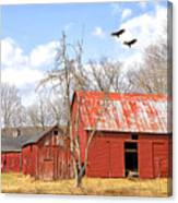 Vultures Over Barn Canvas Print