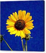 Wabi-sabi Sunflower Canvas Print