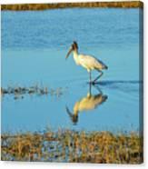 Wadding Wood Stork And Reflection Canvas Print