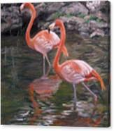 Wading Beauties Canvas Print