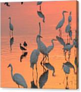 Wading Birds Forage In Colorful Sunset Canvas Print