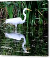 Wading For Food Canvas Print