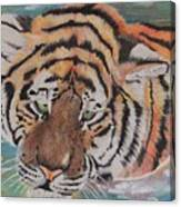 Wading Tiger Canvas Print