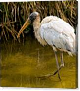 Wading Wood Stork Canvas Print