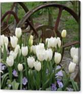 Wagon Wheel Tulips Canvas Print