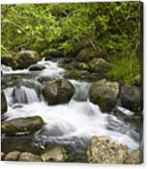 Waihee Valley Stream Canvas Print