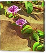 Wailea Beach Morning Glory With Honeybee Canvas Print