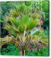 Waimea Palm Study 2 Canvas Print