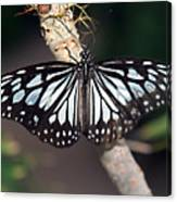 Waiting --- Rice Paper Butterfly Canvas Print