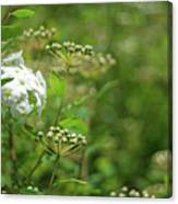 Waiting For Bloom Canvas Print
