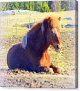 Waiting For The Green Grass To Grow Around My Bed  Canvas Print
