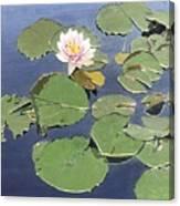 Waiting Lotus Canvas Print