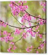 Waking Blooms Canvas Print