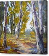 Wakkerstroom Gums Canvas Print