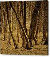 Wald Forest Canvas Print