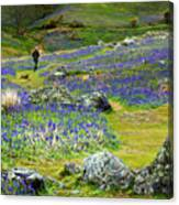 Walk Among The Bluebells Canvas Print