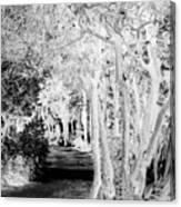Walk In The Dark Canvas Print