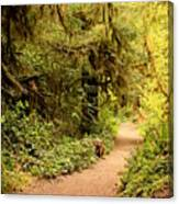 Walk Into The Forest Canvas Print