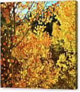 Walking Among The Aspens At Dillon Reservoir Canvas Print