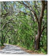 Walking In The Woods Of Amelia Island Canvas Print