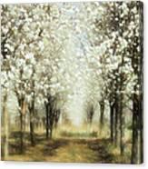 Walking Through A Dream Ap Canvas Print