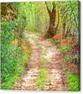 Walkway In Secluded Deciduous Forest Canvas Print