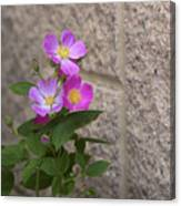 Wall Flower - Wild Rose Canvas Print