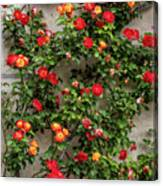Wall Of Roses Canvas Print