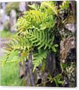 Wall With Fern Canvas Print