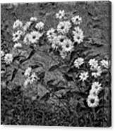 Wallflower Ain't So Bad Bw Canvas Print