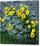 Wallflower Ain't So Bad Canvas Print