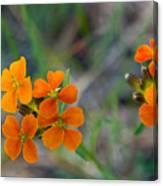 Wallflower Wildflower Canvas Print