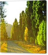 Wanaka Morning Light Canvas Print
