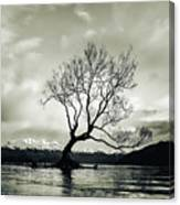 Wanaka Tree - New Zealand  Canvas Print