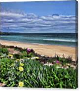 Wandering Around The Foreshore Canvas Print