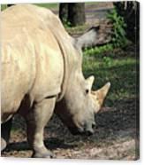 Wandering Rhino Canvas Print