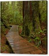 Wandering Through The Rainforest Canvas Print