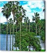 Waokele Pond Palms And Sky Canvas Print