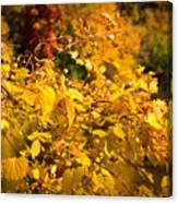 Warm Fall Colors Canvas Print